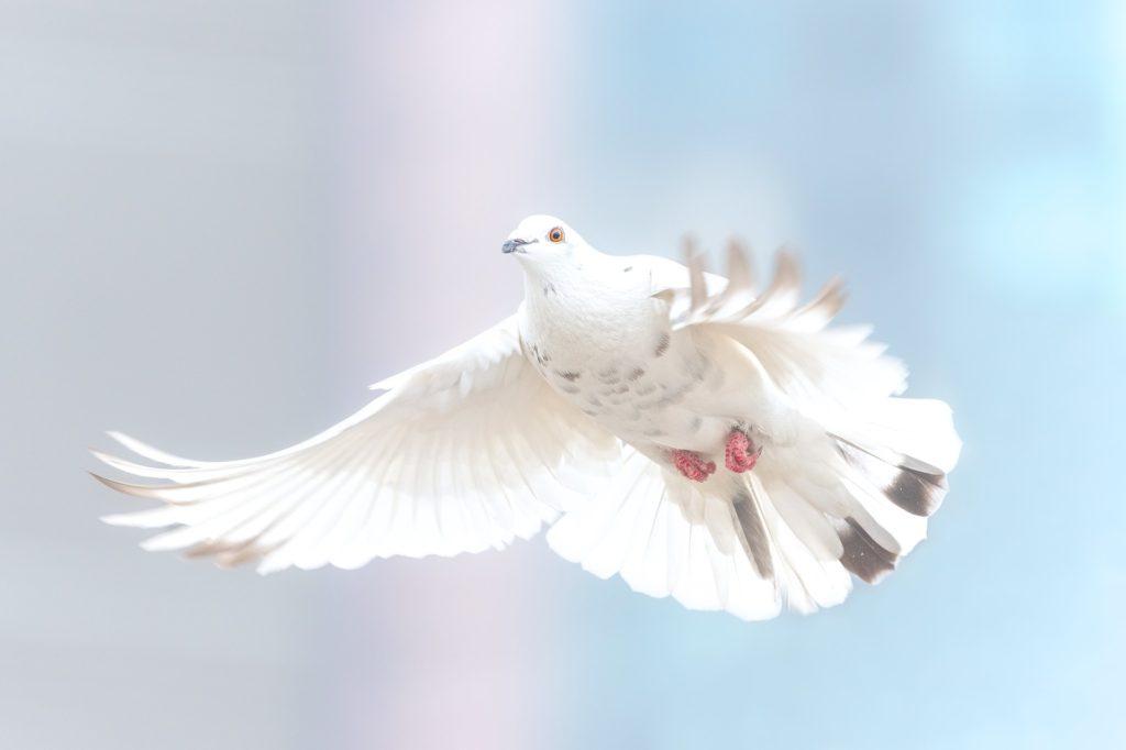 Die Seele ist frei